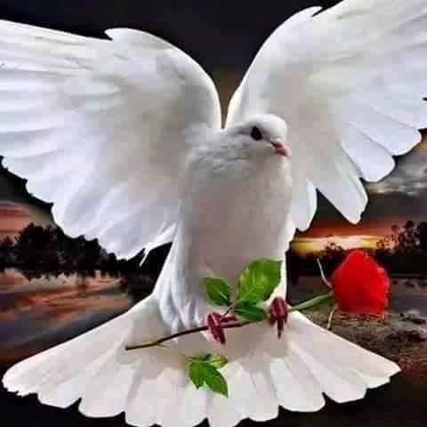 FB_IMG_1470043248889.jpg
