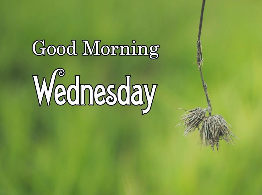 Good-Morning-Wednesday-M (2).jpg