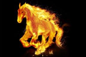 Ngựa Kiêu Hãnh